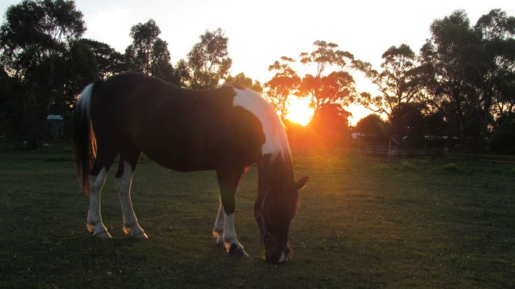 pony in the sunset! my photography ~
