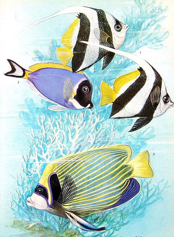Fish Print  Butterfly Fish Snook Leaf Fish   by mysunshinevintage