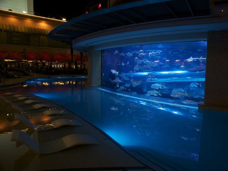 Swim with sharks and dozens of different types of fish in The Tank, an aquarium pool at the Golden Nugget hotel in Las Vegas.