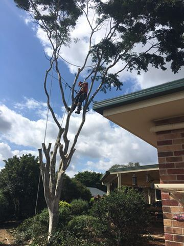 """Why We need tree Lopping or Topping check Out our new #wordpress Post """"The Need For Tree Lopping Services"""" By Treezy Tree Services - Your Local Brisbane Southside Expert Arborists   https://treezytreeservices.wordpress.com/2016/08/26/the-need-for-tree-lopping-services   #treezy #TreezyTreeServices #treeLopping #treetopping #treeLoppingServices #treetoppingServices #treeLoppingBrisbane #treetoppingBrisbane #treeLoppingServicesBrisbane #treetoppingServicesBrisbane #treeLoppingBrisbaneSouthsid"""