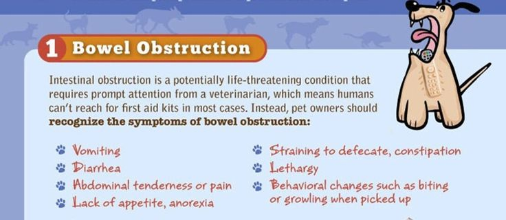 How To Treat Bowel Obstruction In Dog