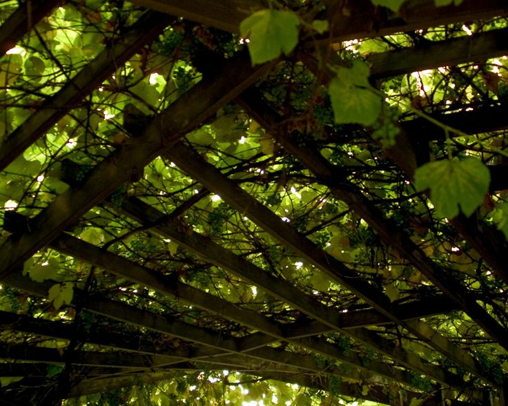 17 Best images about grape trellis on Pinterest String lights, Vines and Stock photos
