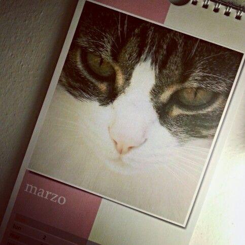 Calendario d'amore