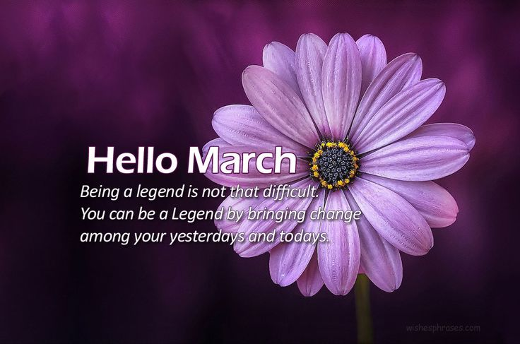 Here is the collection Hello March Wishes, Messages Sms.If you are looking for the new month wishes, then you are at the right place. Here we have collected a very nice collection of Hello March Wishes,
