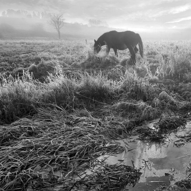 Misty by Dariusz Klimczak on 500px