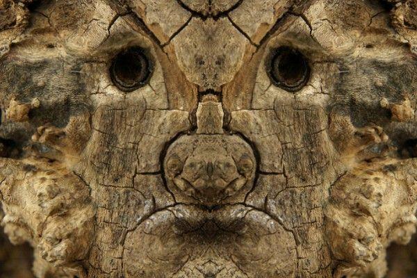Elido Turco est un artiste photographe italien passionné de nature et de détails. Dans cette série photographique baptisée « Dream Creatures », il transforme les formes organiques des arbres en créatures mystérieuses.  Pour réaliser ces personnages, il utilise simplement une symétrie verticale et duplique son image afin de faire apparaitre les visages cachés des monstres qui hantent nos forêts…