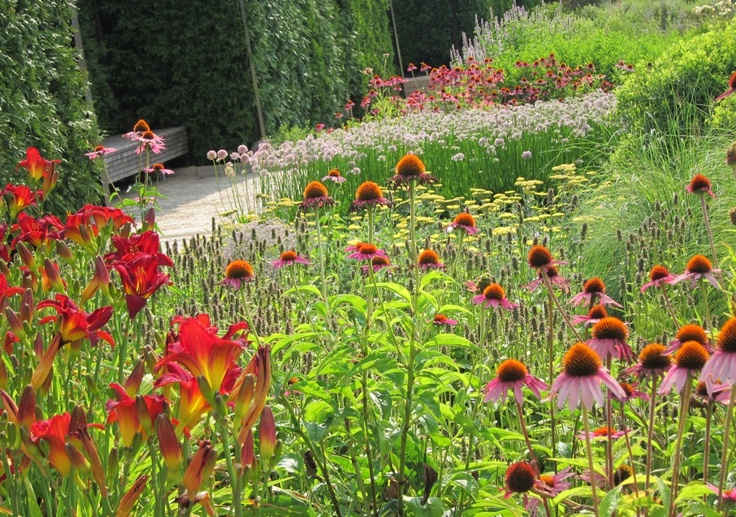 162 best images about planting combinations on pinterest for Piet oudolf planting schemes