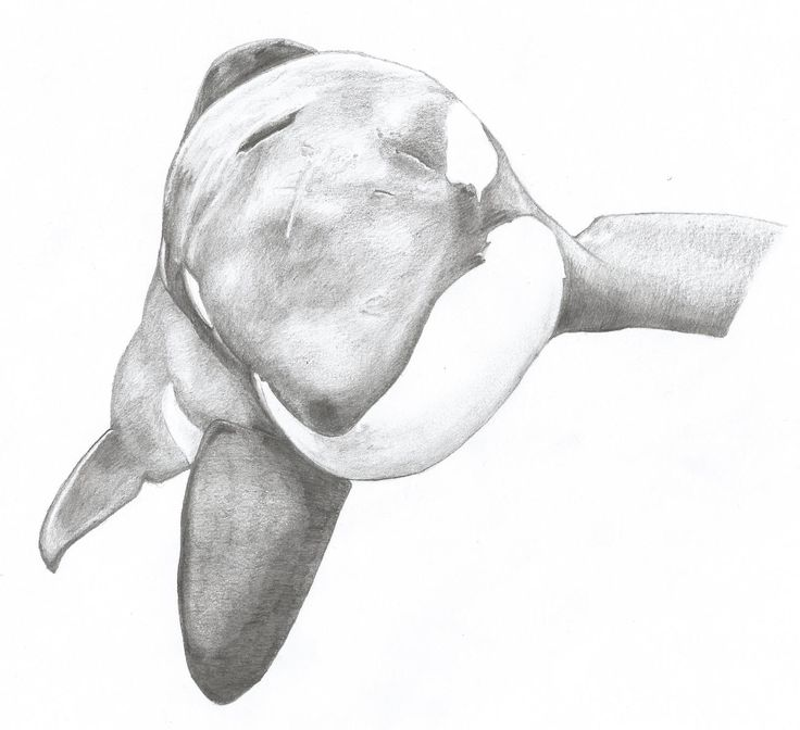 Antarctic Orca SA Pod genealogy chart by Maaliks-World on ... |Pod Of Orcas Drawing