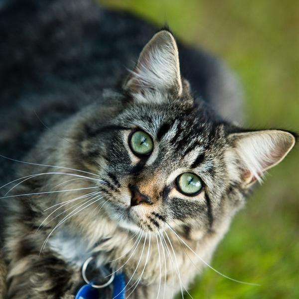 Las 10 razas de gatos más amigables | eHow en Español