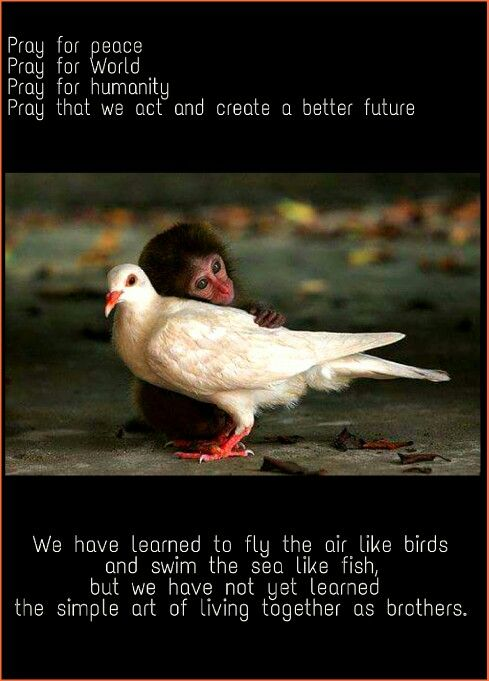 Pray for peace  Pray for World Pray for humanity  Pray that we act and create a better future