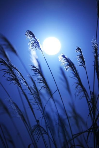 """Japanese poem Haiku by Basho MATSUO (1644~1694) """"""""the clouds come and go / providing a rest for all / the moon viewers"""""""