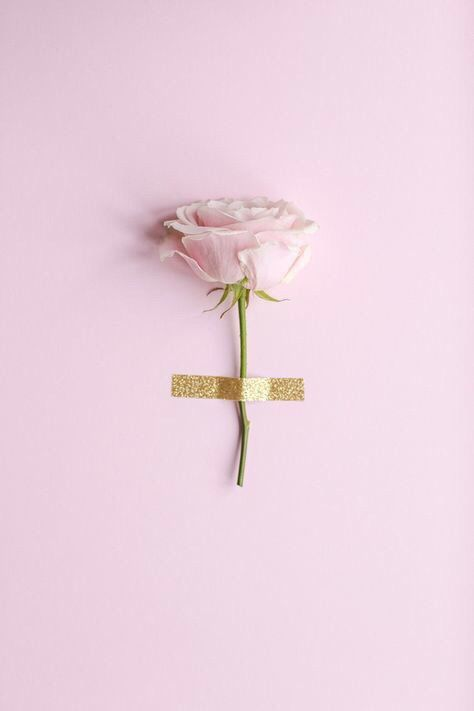 A single rose //