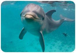 Zwemmen met dolfijnen op Curacao.