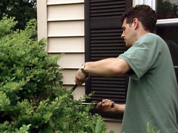 Tips for Summer Yard Maintenance from DIYnetwork.com | Prune plants that interfere with AC condenser | Check for dead tree limbs that may cause damage during thunderstorms