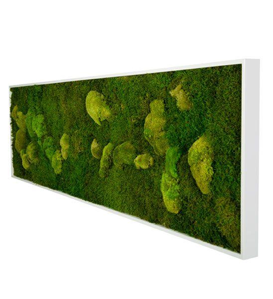moosbild 140 x 40cm greenbop online shop van cleef. Black Bedroom Furniture Sets. Home Design Ideas