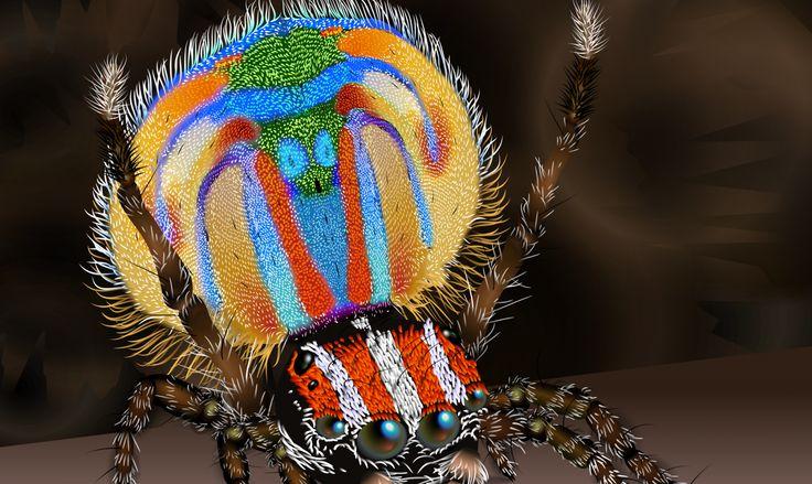 """A diferencia de otras de sus más atemorizantes """"primas"""", a las arañas pavo real las adornan hermosos colores que las hacen lucir verdaderamente adorables."""