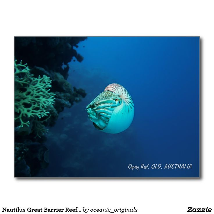 Nautilus Great Barrier Reef Coral Sea Postcard