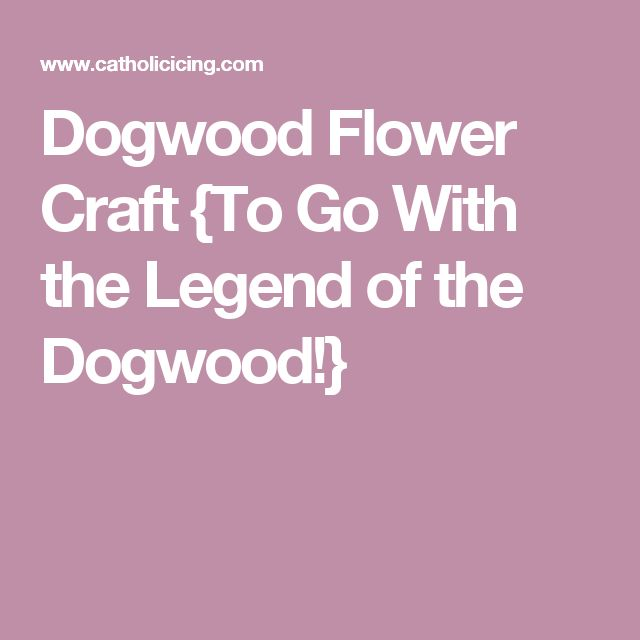 Dogwood Flower Craft {To Go With the Legend of the Dogwood!}