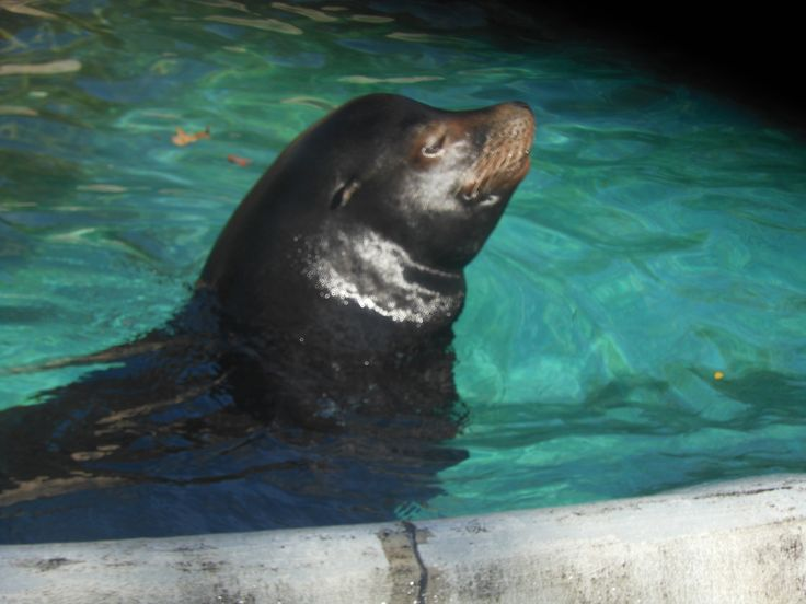 Fun Sea Lion Facts for Kids