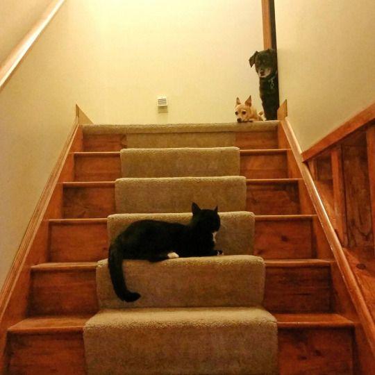 Stairway, Friends, Tumblr, Posts, Animals, Cat, Stairs, Amigos, Animais