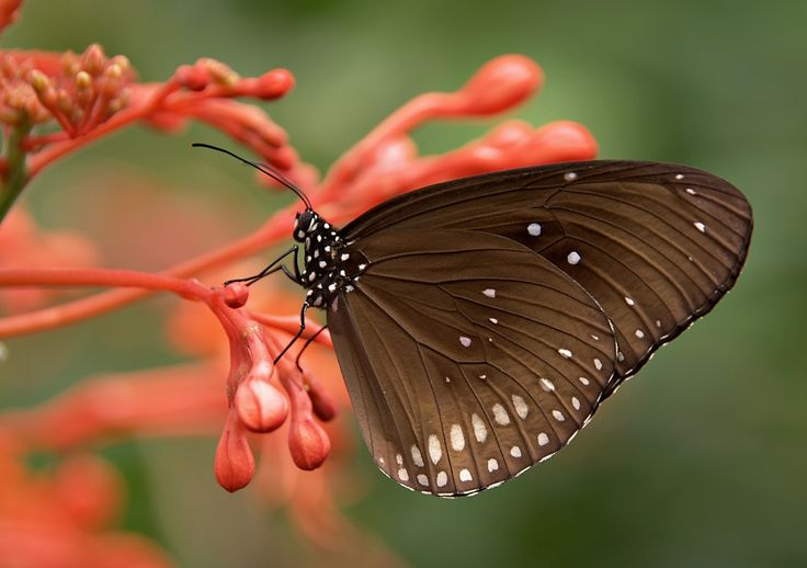 Black and White Butterfly on Red Flower · Free Stock Photo