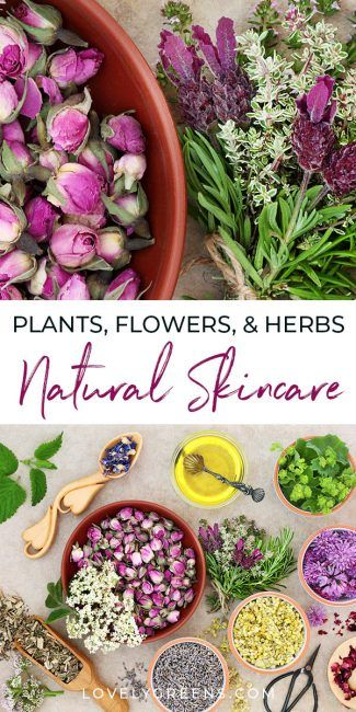 An introduction to herbs for skincare including plants & flowers to use for different skin types and conditions. Includes herbal skin care recipe ideas #lovelygreens #herbalism #diybeauty