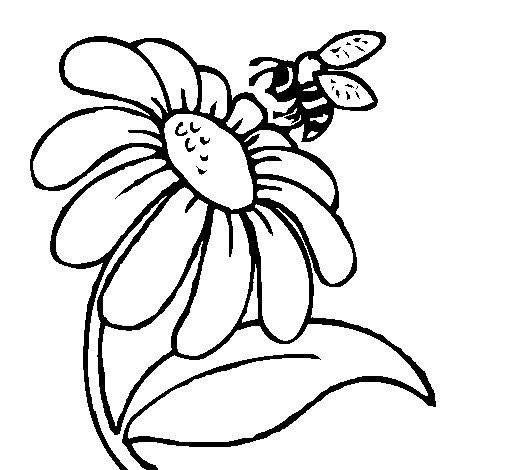 53 best Floral images on Pinterest Drawings Coloring books and