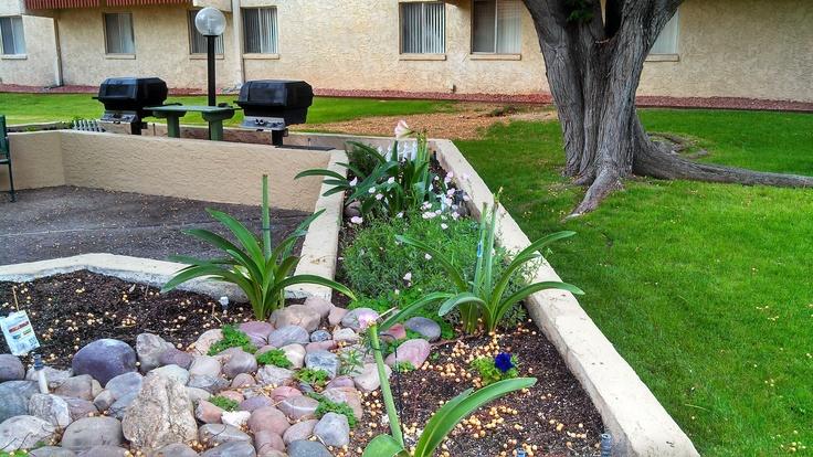 #Community Garden #Seniorliving #independantseniorliving #seniors #garden #apartments #tucson