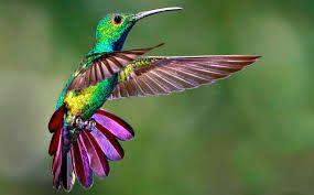 Resultado de imagen para animales mas bonitos del mundo