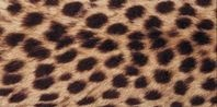 How to Paint a Cheetah Print on Walls | eHow.com