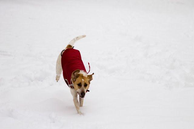 Foto a Fuoco: Come si Fotografa... la Neve?