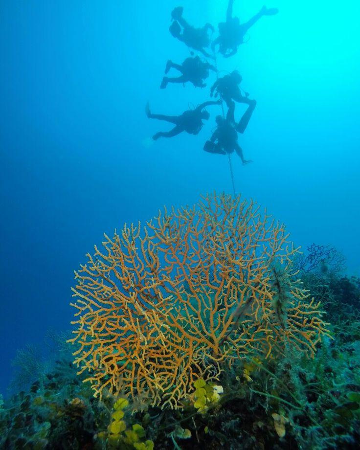 Ayvalık dalış okulu - ida dalış merkezi #scuba #scubadiving #diving #underwater #dalisnoktam #ayvalikdalis #idadalismerkezi #daliskursu #dalisokulu #teknedalışı www.idadiving.com