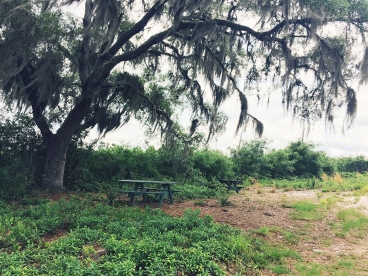 Picnic Areas along Pine Island Trail