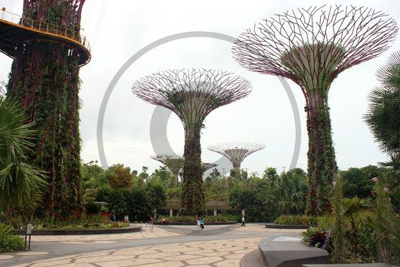 Gardens by the Bay – Singapour | Christie Cartes $2 - Photo de Thibaud Laroche - christiecartes.com