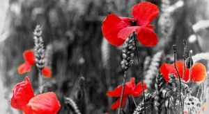 Remembrance Day Activities, Crafts, Songs,