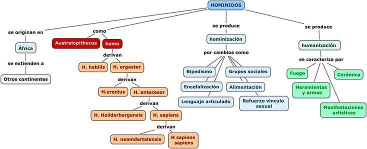 Mapa Conceptual hominidos | ESCUELA | Pinterest