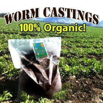 Red composting worms for sale.