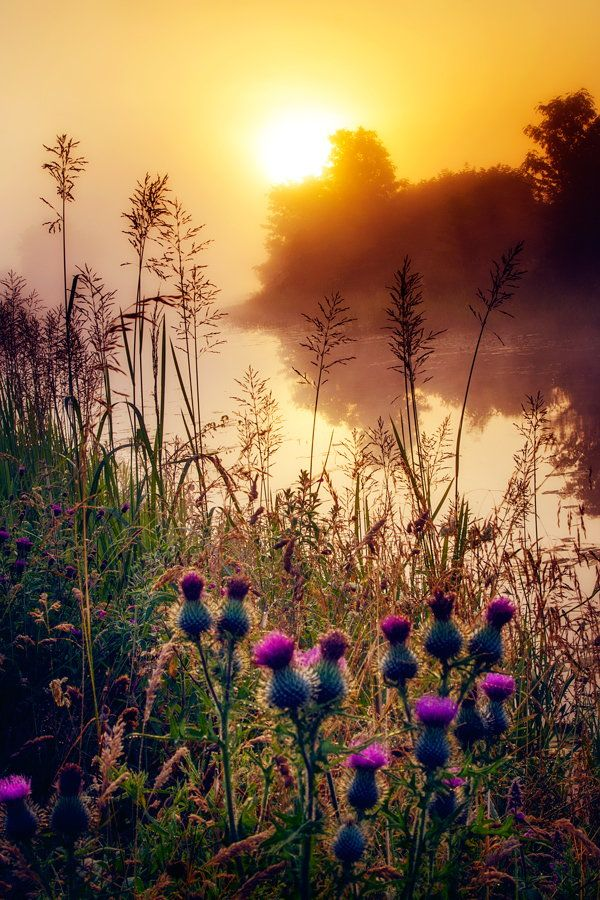 Scottish sunrise. Beautiful is the thistle.