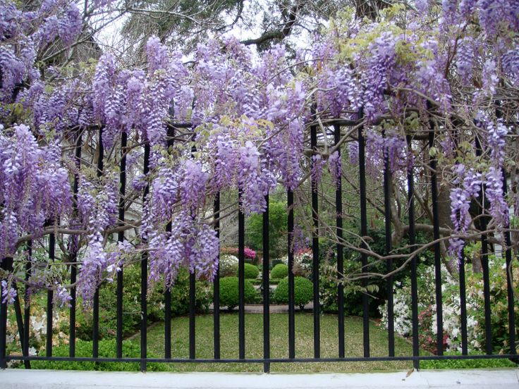 Charming Southern Garden