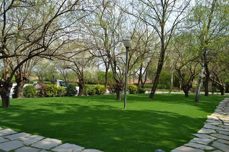 8 migliori immagini per il giardino su pinterest fieno e - Erba nana per giardino ...