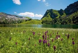 Bernese Oberland Traverse | Alps Trek | Kandersteg Hiking