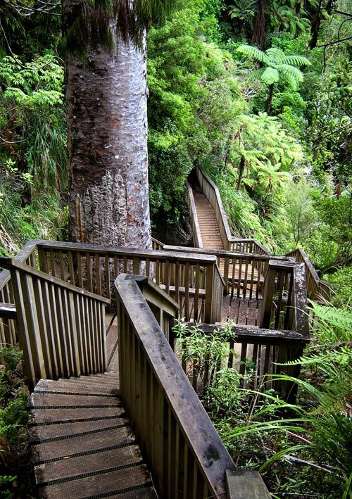 Believe it or not, this is Auckland. One moment you are on the highway, the next you are in the wilderness. The path descends deep down into the rainforest on the way to the Huka falls.