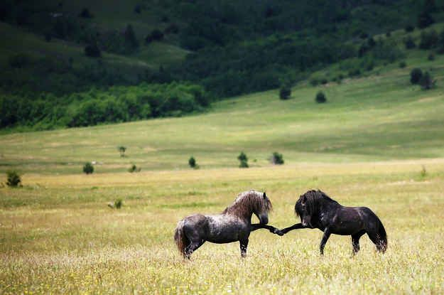 These horses fist-bumping: | 25 Photos You Definitely Need To See Before You Die