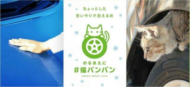 7人に1人が「猫バンバンしたら猫が隠れてた」 日産「猫バンバン」プロジェクト調査結果発表 - ねとらぼ