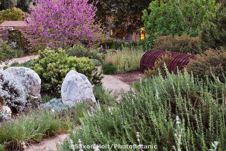 23 best xeriscape images on pinterest landscaping ideas for Southern california native plants
