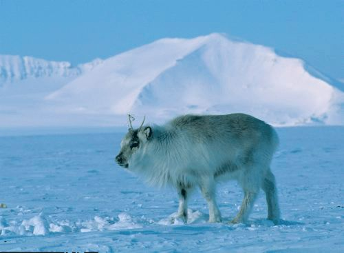 I went to Svalbard when I was about 9. I want to go back and take my boys.