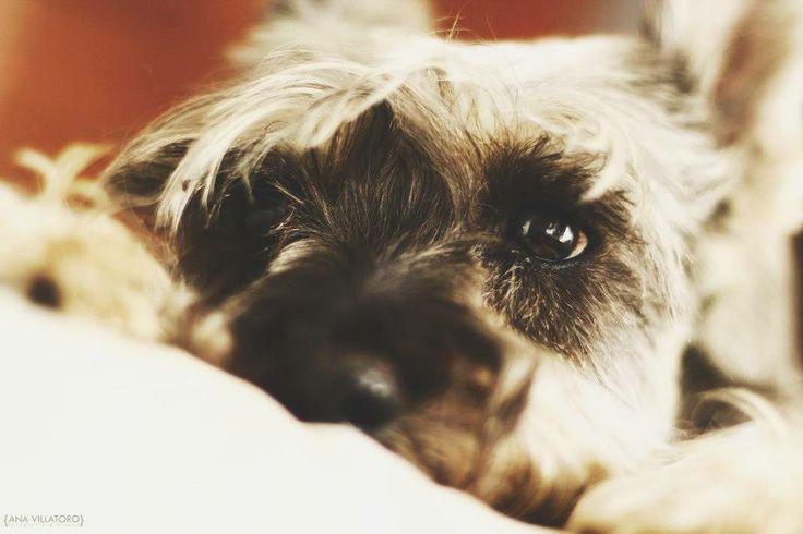#photography #dog #puppy