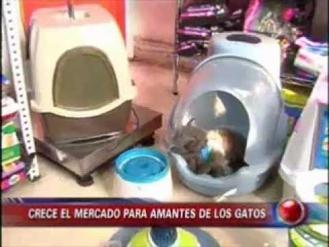 baños para gatitos