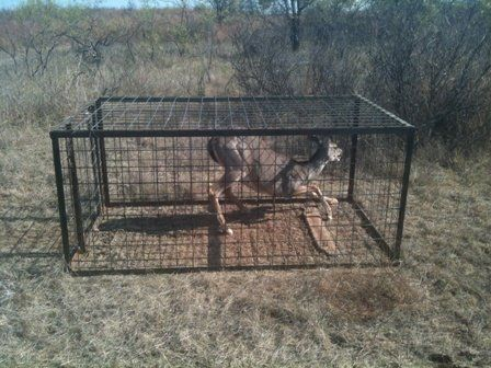 We urgethe residents of Lyndhurst to sign this petition in a joint effort to forcean immediate stop to the trap and bolt method of exterminating deer. However, we encourage people from all communities who areopposed to trap and boltto sign.   Trap and bolt involves trapping a deer in a metal cage....