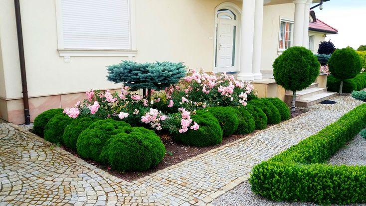 Rabata różana w ogrodzie.Ogrody Kielce.